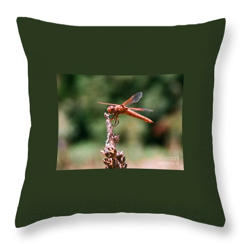 Dragonfly Throw Pillow featuring the photograph Red Dragonfly II by Dean Triolo