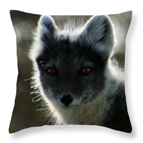 Arctic Fox Throw Pillow featuring the photograph Red Eyes by Anthony Jones