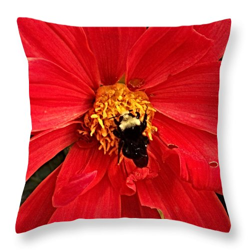 Flower Throw Pillow featuring the photograph Red Flower And Bee by Anthony Jones