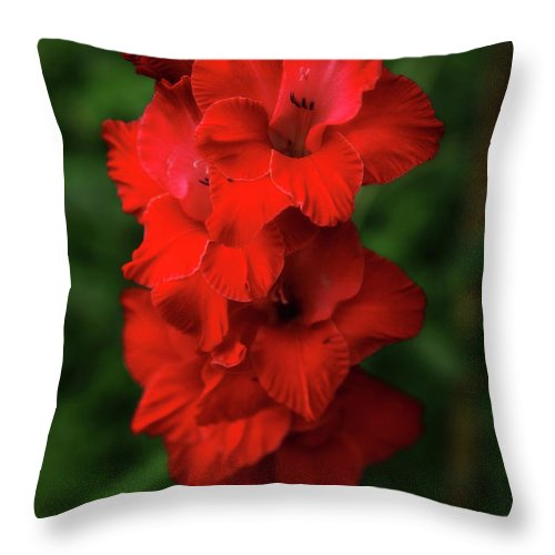 Red Flower Throw Pillow featuring the photograph Red Flower by Artie Rawls