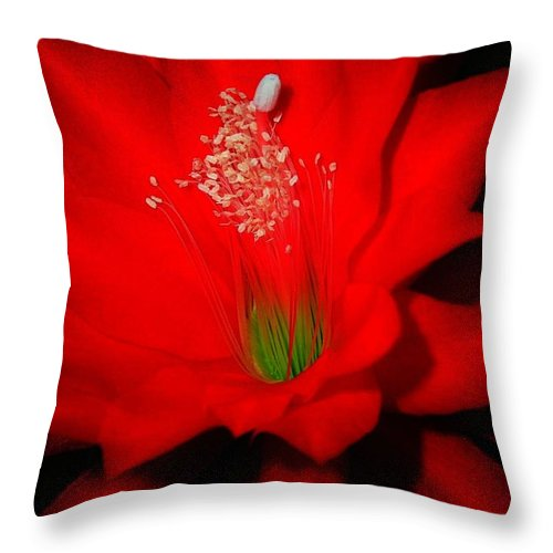 Garden Throw Pillow featuring the photograph Red Flower For You by Juergen Weiss