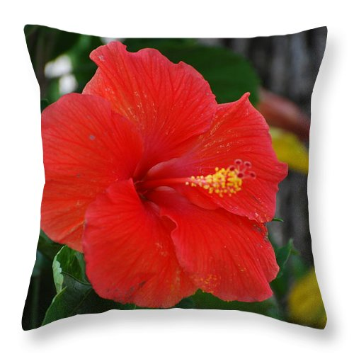 Flowers Throw Pillow featuring the photograph Red Flower by Rob Hans