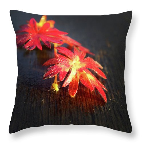Red Throw Pillow featuring the photograph Red Flowers by Rene Larsen