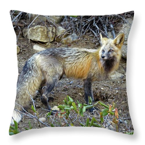 Fox Throw Pillow featuring the photograph Red Fox by Cindy Murphy - NightVisions