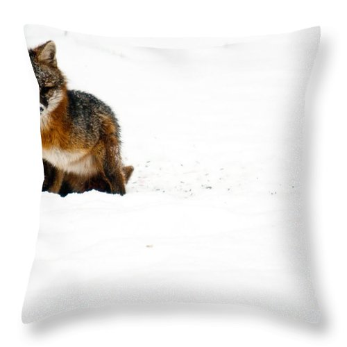Fox Throw Pillow featuring the photograph Red Fox In The Snow by Douglas Barnett