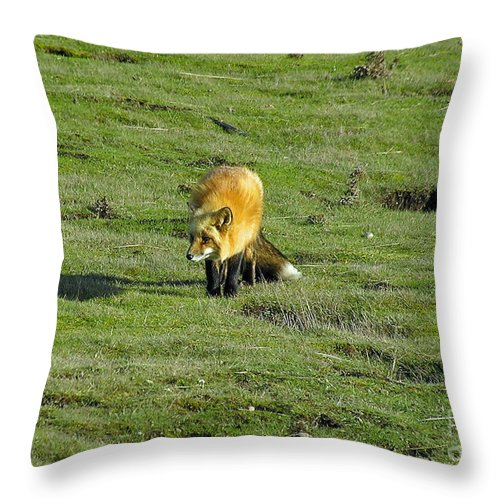 Fox Throw Pillow featuring the photograph Red Fox by Louise Magno