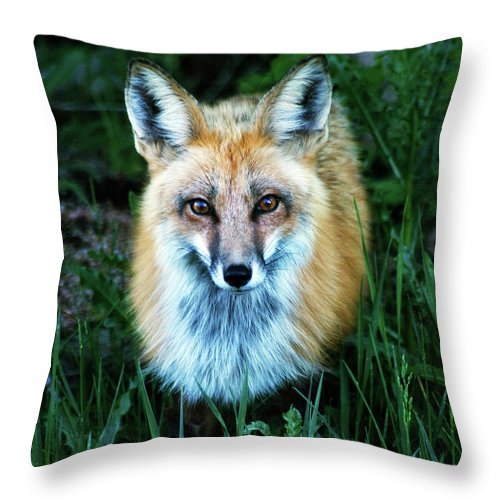 Fox Throw Pillow featuring the photograph Red Fox by Mark Ivins