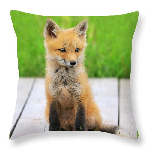 Red Fox Throw Pillow featuring the photograph Red Fox by Tony Beck