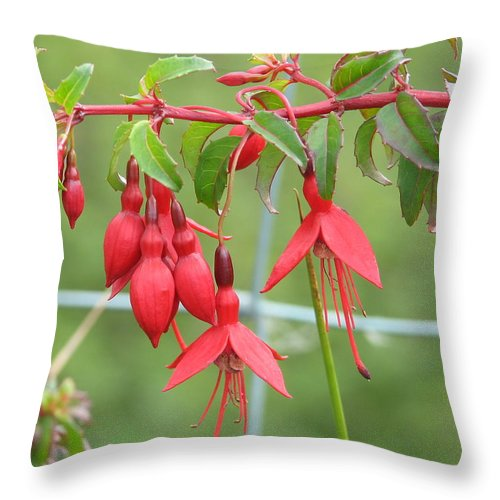 Fresia Throw Pillow featuring the photograph Red Fresia by Kelly Mezzapelle