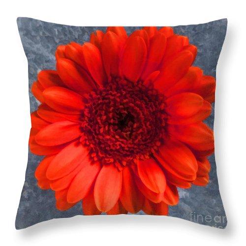 Gerbera Throw Pillow featuring the digital art Red Gerbera by Liz Leyden