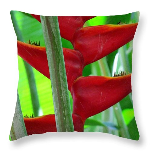 Red Flowers Throw Pillow featuring the photograph Red Heliconia by Mary Deal