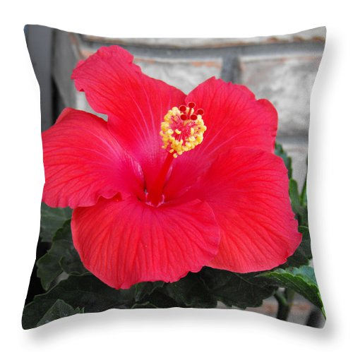 Photography Throw Pillow featuring the photograph Red Hibiscus by Ruth Palmer