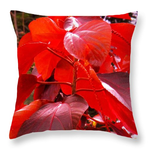 Red Throw Pillow featuring the photograph Red by Ian MacDonald