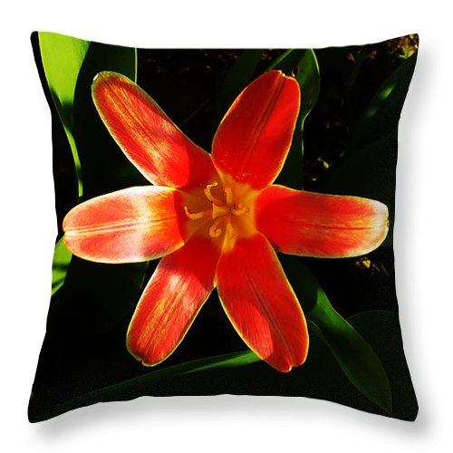 Tulip Throw Pillow featuring the photograph Red Laughing At Me by Jasna Dragun