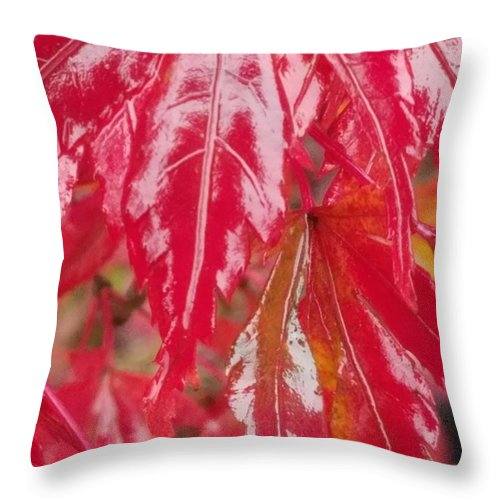 Red Leaf Abstract Throw Pillow featuring the photograph Red Leaf Abstract by Maria Urso