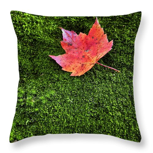 Bryophyta Throw Pillow featuring the photograph Red Leaf Green Moss by John Greim