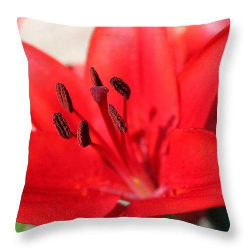 Lilly Throw Pillow featuring the photograph Red Lilly by Lauri Novak