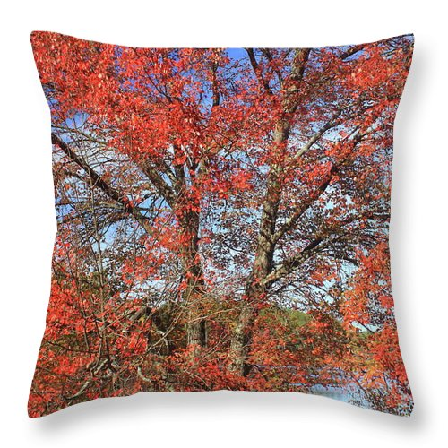 Forest Throw Pillow featuring the photograph Red Maple Foliage Kaleidoscope by John Burk