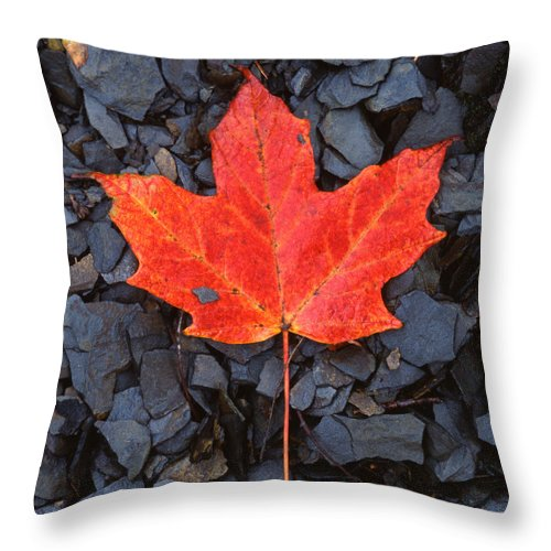 Black Shale Throw Pillow featuring the photograph Red Maple Leaf On Black Shale by John Harmon