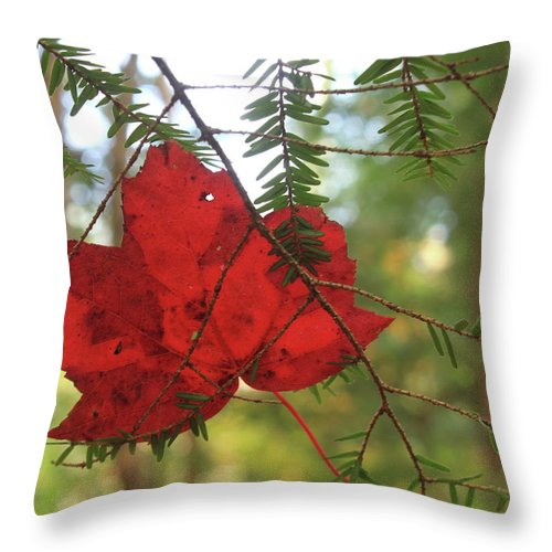 Forest Throw Pillow featuring the photograph Red Maple Leaf On Hemlock by John Burk