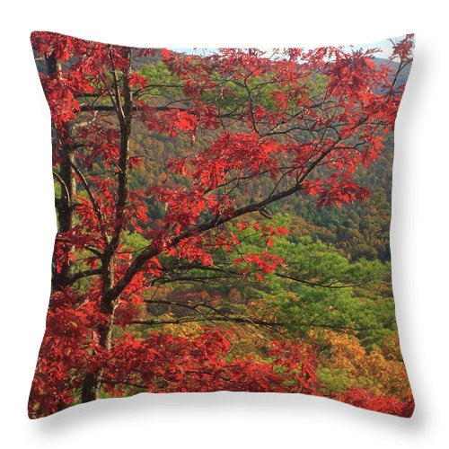 Oak Throw Pillow featuring the photograph Red Oak And Millers River Valley by John Burk