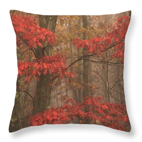 Oak Throw Pillow featuring the photograph Red Oak In Fog by John Burk
