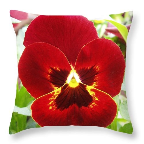 Red Throw Pillow featuring the photograph Red Pansy by Nancy Mueller