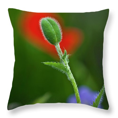 Poppy Throw Pillow featuring the photograph Red Poppy Bud by Heiko Koehrer-Wagner
