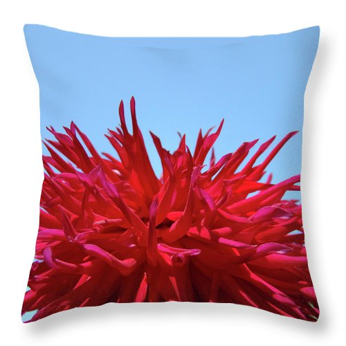 Dahlia Throw Pillow featuring the photograph Red Purple Dahlia Flower Art Print Giclee Baslee Troutman by Baslee Troutman