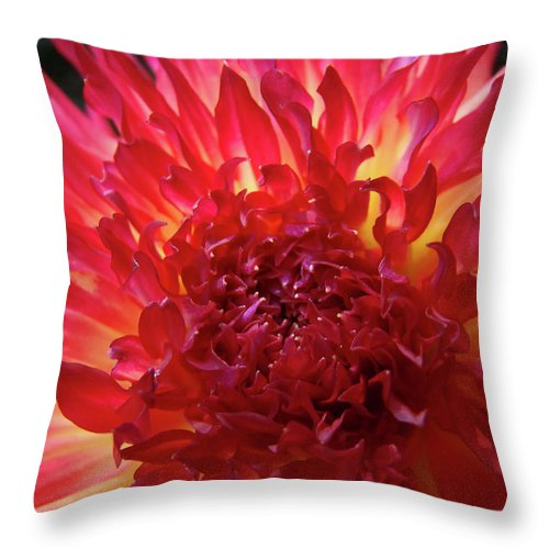 Dahlia Throw Pillow featuring the photograph Red Purple Dahlia Flower Summer Dahlia Garden Baslee Troutman by Baslee Troutman