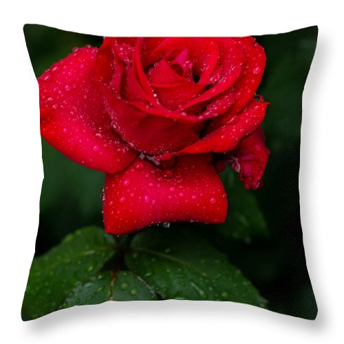 Rose Throw Pillow featuring the photograph Red Rain 2 by Steve Marler