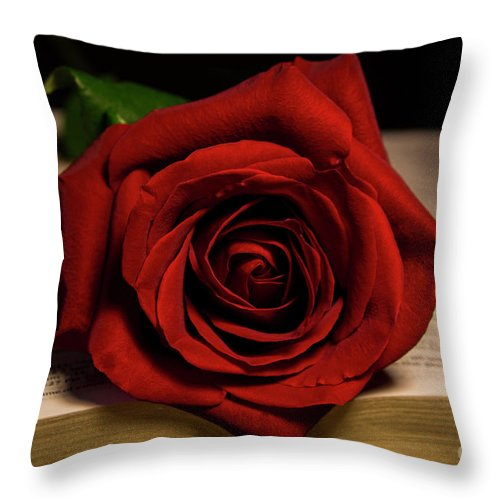 Rose Throw Pillow featuring the photograph Red Red Rose by Mechala Matthews