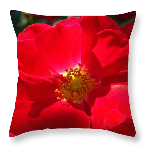 Rose Throw Pillow featuring the photograph Red Rose Art Print Sunlit Roses Botanical Giclee Baslee Troutman by Baslee Troutman