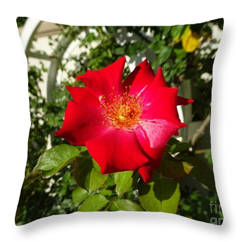 Rose Throw Pillow featuring the photograph Red Rose In Summer by Camryn Zee Photography