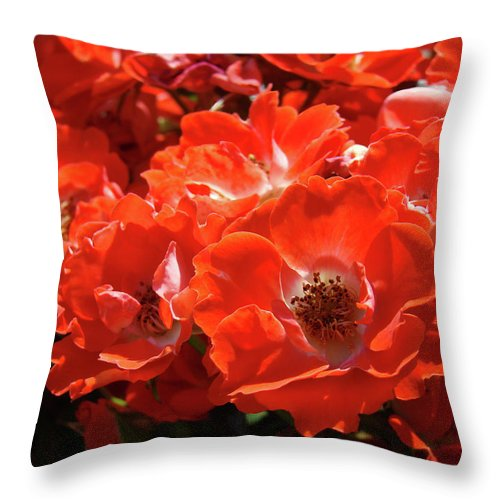 Rose Throw Pillow featuring the photograph Red Roses Botanical Landscape 1 Red Rose Giclee Prints Baslee Troutman by Baslee Troutman
