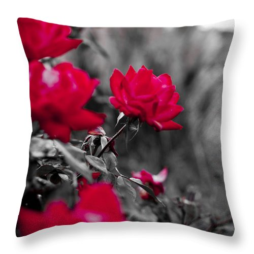 Red Throw Pillow featuring the photograph Red Roses by Dustin K Ryan