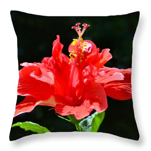 Hibiscus Throw Pillow featuring the photograph Red by Sandi OReilly
