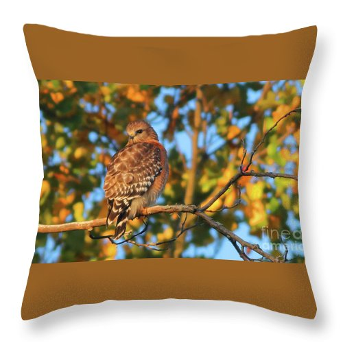 Hawk Throw Pillow featuring the photograph Red-shouldered Hawk by Debbie Parker