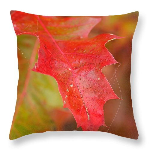 Oak Leaves Throw Pillow featuring the photograph Red Silk by Linda McRae