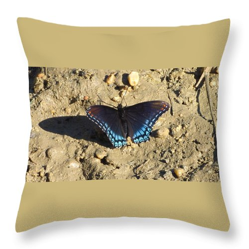 Red Spotted Purple Astyanax Butterfly Images Maryland Butterfly Images Red Spotted Purple Photo Prints Astyanax Prints Nature Butterfly Images Forest Ecosystem Biodiversity Throw Pillow featuring the photograph Red Spotted Purple Astyanax by Joshua Bales