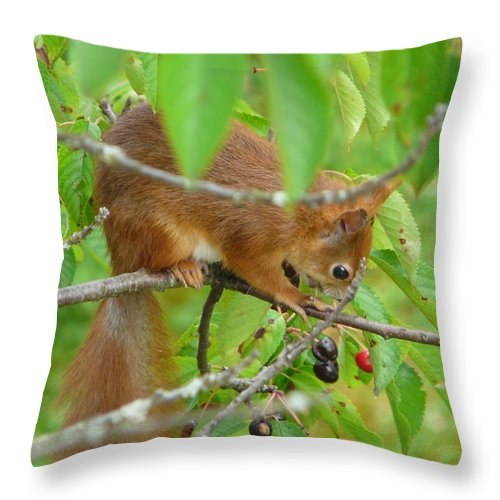 Animal Throw Pillow featuring the photograph Red Squirrel In The Cherry Tree by Valerie Ornstein