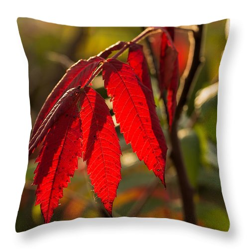 Red Throw Pillow featuring the photograph Red Sumac Leaves by Les Palenik