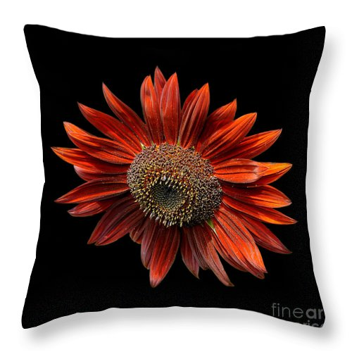 Red Throw Pillow featuring the photograph Red Sunflower On Black by Edward Sobuta