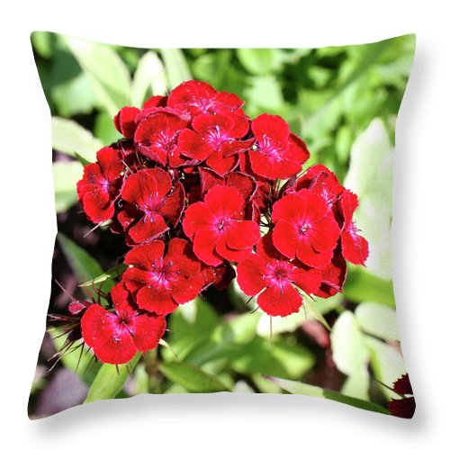 Red Sweet William Throw Pillow featuring the photograph Red Sweet William by Christiane Schulze Art And Photography