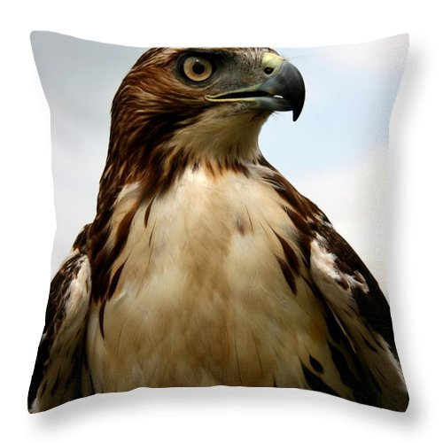 Hawk Throw Pillow featuring the photograph Red Tail Hawk 2 by David Dunham