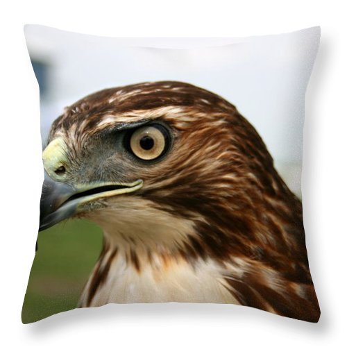 Hawk Throw Pillow featuring the photograph Red Tail Hawk 3 by David Dunham