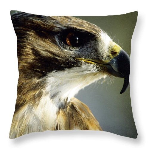 Hawk Throw Pillow featuring the photograph Red Tail Hawk by Steve Somerville