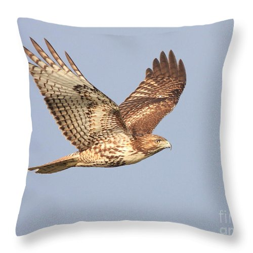 Red Tail Hawk Throw Pillow featuring the photograph Red Tailed Hawk 20100101-1 by Wingsdomain Art and Photography
