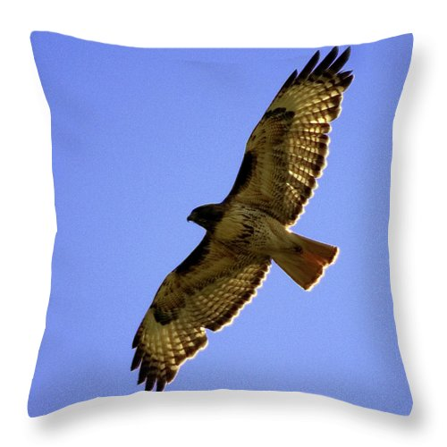Red-tailed Hawk Throw Pillow featuring the photograph Red-tailed Hawk by Mark Ivins