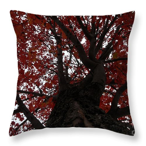 Fall Throw Pillow featuring the photograph Red Tree by David Lee Thompson